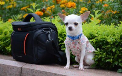 Las 10 razas de perro más pequeñas del mundo