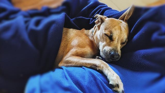 perro durmiendo con manta